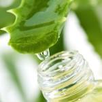 Aloe vera: proprietà, benefici e rimedi naturali