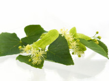 Tea Tree Oil: proprietà, benefici e rimedi naturali