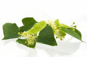 tea tree oil olio essenziale pelle eczema dermatite acne brufoli foruncoli candida rimedi naturali