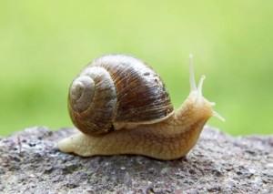 snail slime bava di lumaca pelle capelli bellezza rimedi naturali