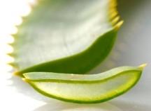 10 impieghi dell'Aloe vera per la tua bellezza