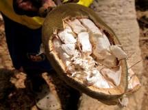 Polvere di Baobab: proprietà, benefici e rimedi naturali