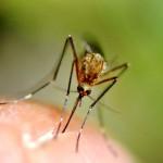 Rimedi naturali per allontanare le zanzare e alleviare il prurito delle punture