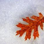 Rimedi naturali contro la febbre ed il raffreddore davvero efficaci
