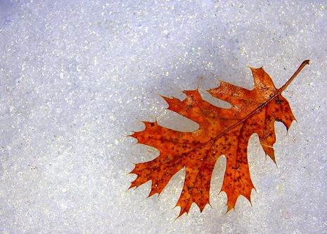 inverno malanni rimedi naturali cure fai-da-te raffreddore febbre influenza