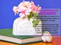 Olio essenziale di Geranio: proprietà curative, impieghi di bellezza e rimedi naturali
